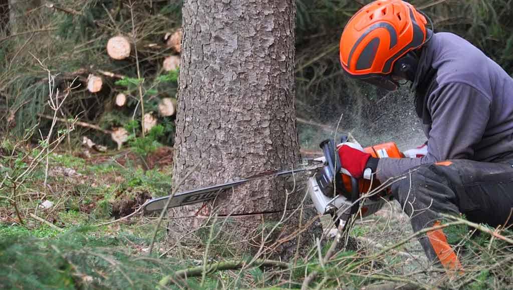 Holzgruppe Sporrer minimiert Unfallrisiko